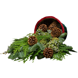 Old fashioned Christmas basket filled with evergreens, pine cones, and Christmas berries