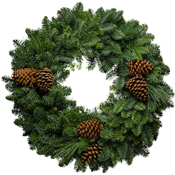 Large fresh Christmas wreaths without a bow