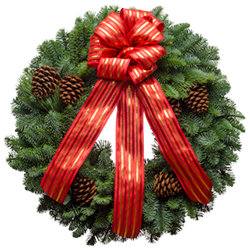 Live Christmas wreaths with a red silky ribbon and pine cones