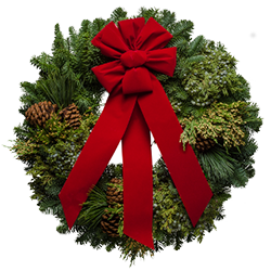Beautiful fresh Christmas wreaths with blue & yellow berries and a red velvet bow