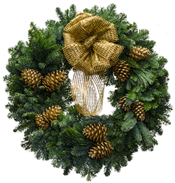 Large Christmas wreaths with a metallic gold bow and gold painted cones