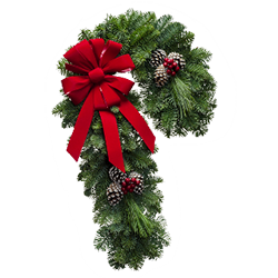 Candy cane shaped fresh Christmas wreath with a red velvet bow