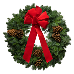Fresh Christmas wreaths decorated with a red velvet Christmas bow